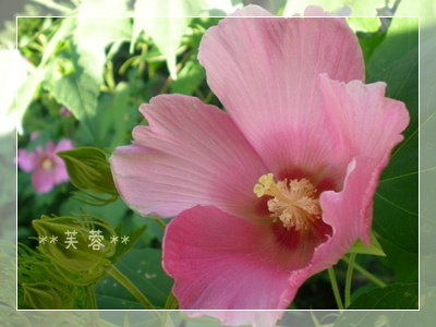 F20100911常泉寺06