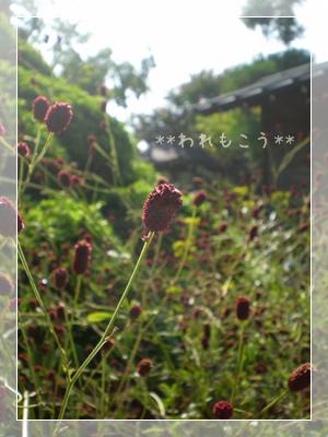 F20100911常泉寺08