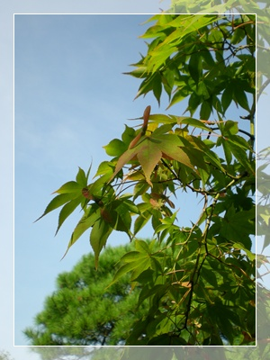F20100911常泉寺09