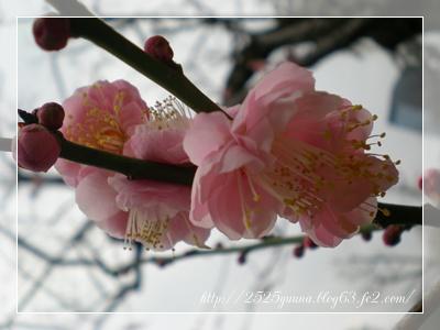 F20110206小石川後楽園02