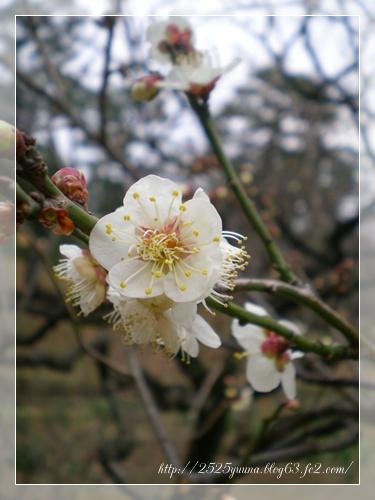 F20110206小石川後楽園01