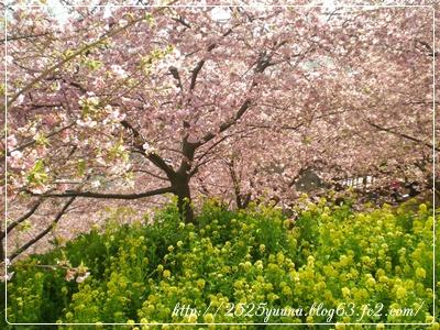 F20110226松田の河津桜03