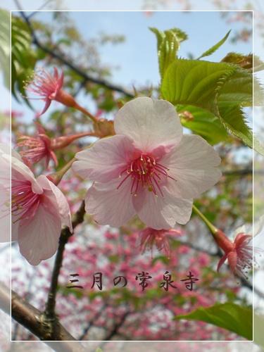 F20110320常泉寺01