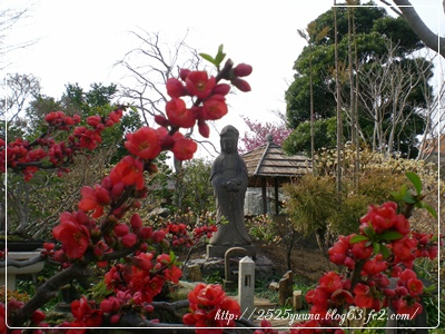 F20110320常泉寺19