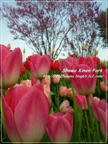 F20110424昭和記念公園01