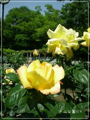 F20110514戸山公園02