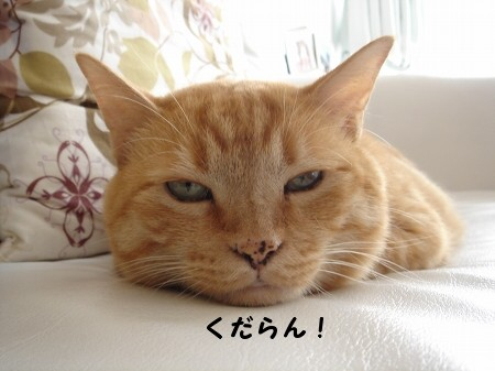 猫バス!? (3)