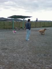 Running_dogs2.jpg