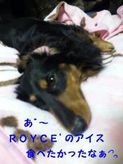 ROYCE'食べたかった~