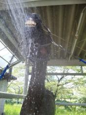 馬の水浴び2