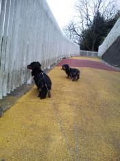 SILK&IVE散歩2