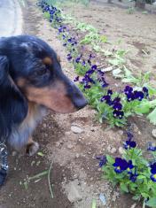 SILKとお花♪