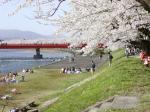 佐賀県に桜咲け!