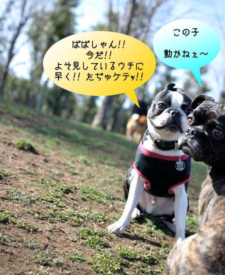 20100314_006.jpg
