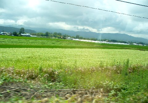 美瑛から先の田園地帯