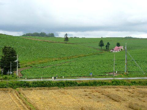 美馬牛付近の丘