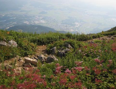 上野登山道 029