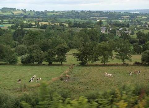 牛のいる風景 028