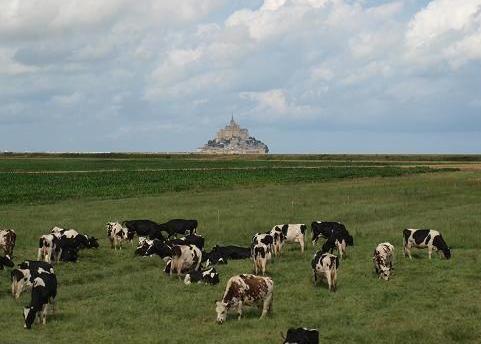 牛とモンサンミシェル 049