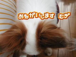 image0603143.jpg