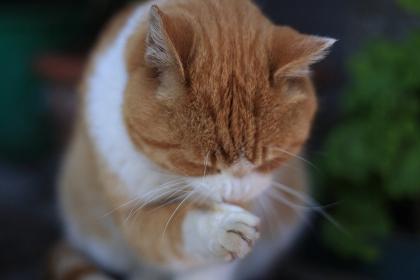 cat0055-051_m.jpg