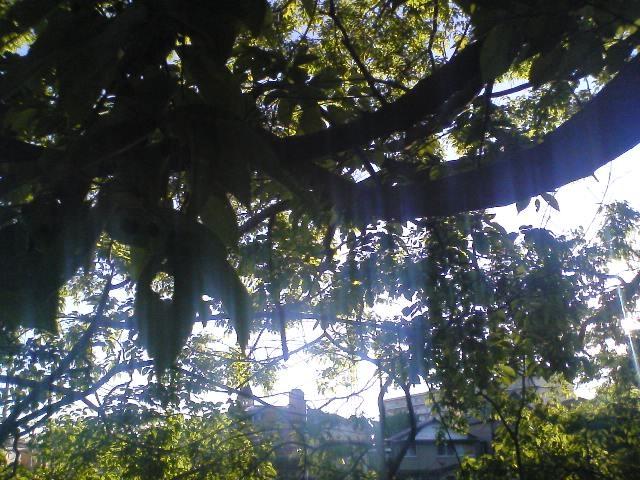 自然カーテン