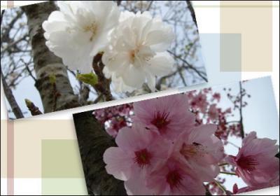25_convert_20090308090114.jpg