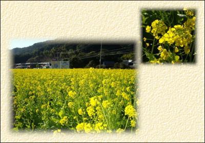 5_convert_20090108171414.jpg