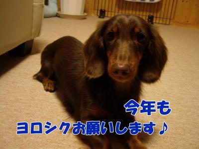 IMGP6325_convert_20090101210542.jpg