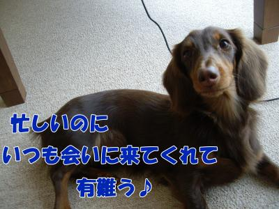 IMGP6383_convert_20090108165358.jpg