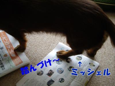 IMGP6595_convert_20090122135357.jpg