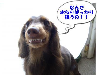 IMGP6611_convert_20090126155222.jpg