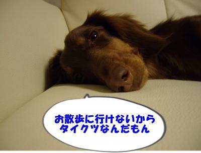 IMGP6955_convert_20090226145204.jpg