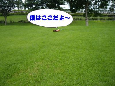 IMGP8599_convert_20090715232225.jpg