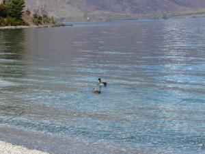湖畔でランチ