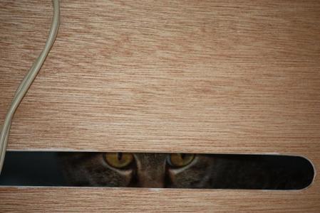 猫オフ会5