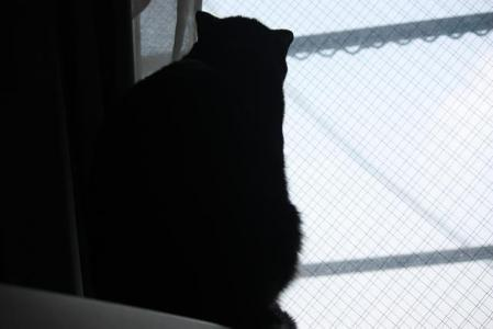 猫オフ会7