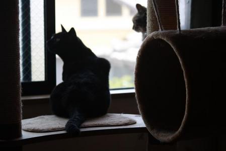 ある日の猫達1