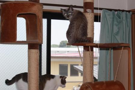 ある日のネコたち5