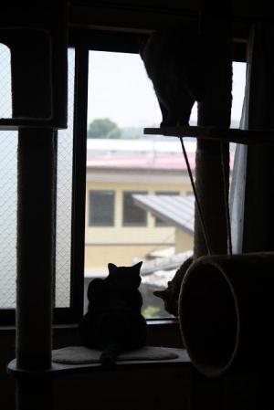 ある日のネコたち4