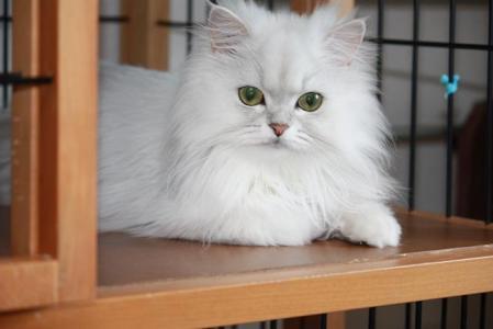 あの猫なあ~に?