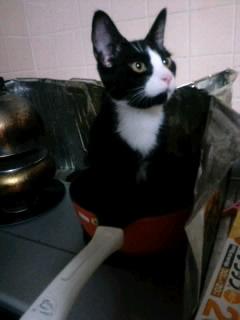 フライパン猫