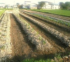 畑・畑・畑