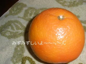 P3150141.jpg