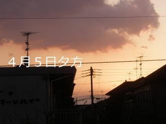 P4050171.jpg