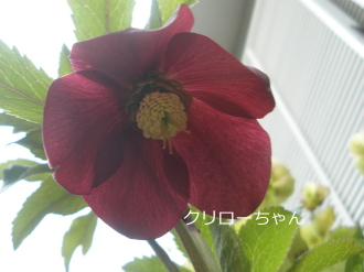 P4110217.jpg