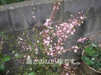 P4110218.jpg