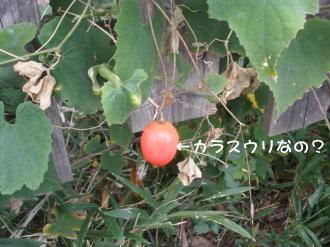PA130734.jpg