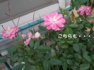 PA230781.jpg