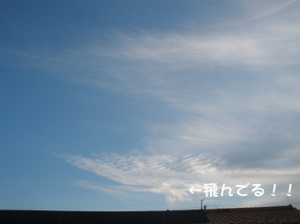 PA280809.jpg